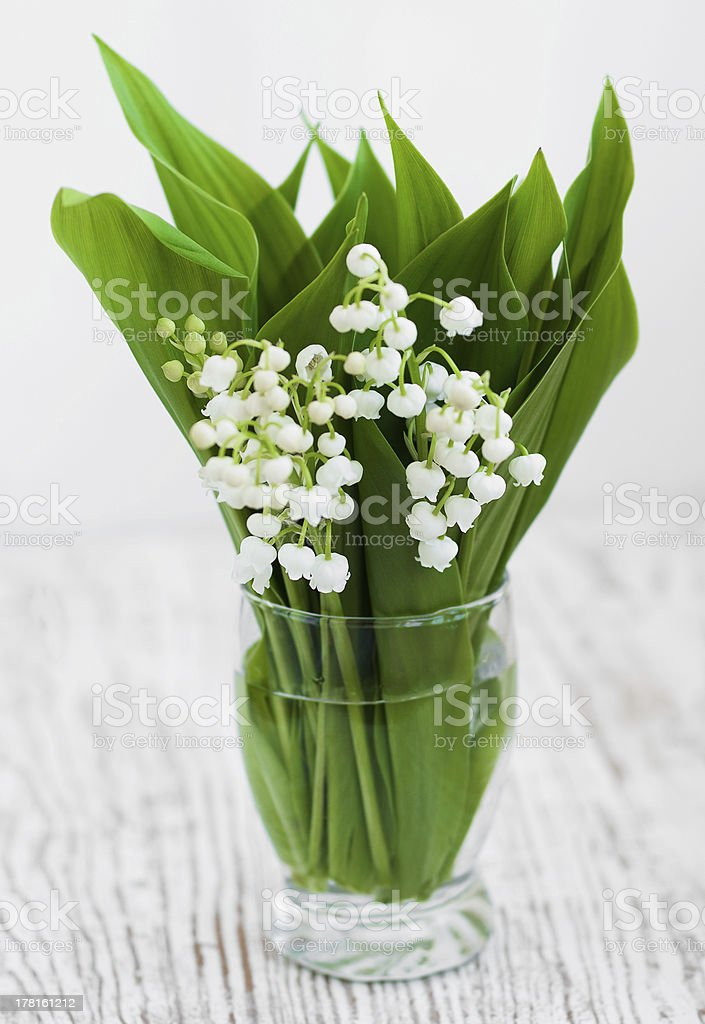 Bouquet lilies of the valley royalty-free stock photo