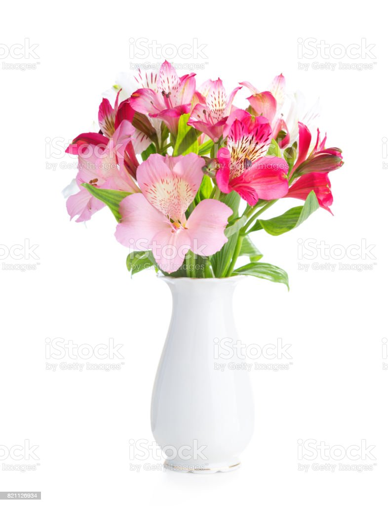 Bouquet of Alstroemeria flowers in  white porcelain vase isolated on white background. stock photo