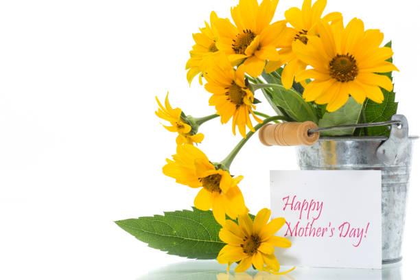 花束美麗的綻放黃色雛菊孤立在白色圖像檔