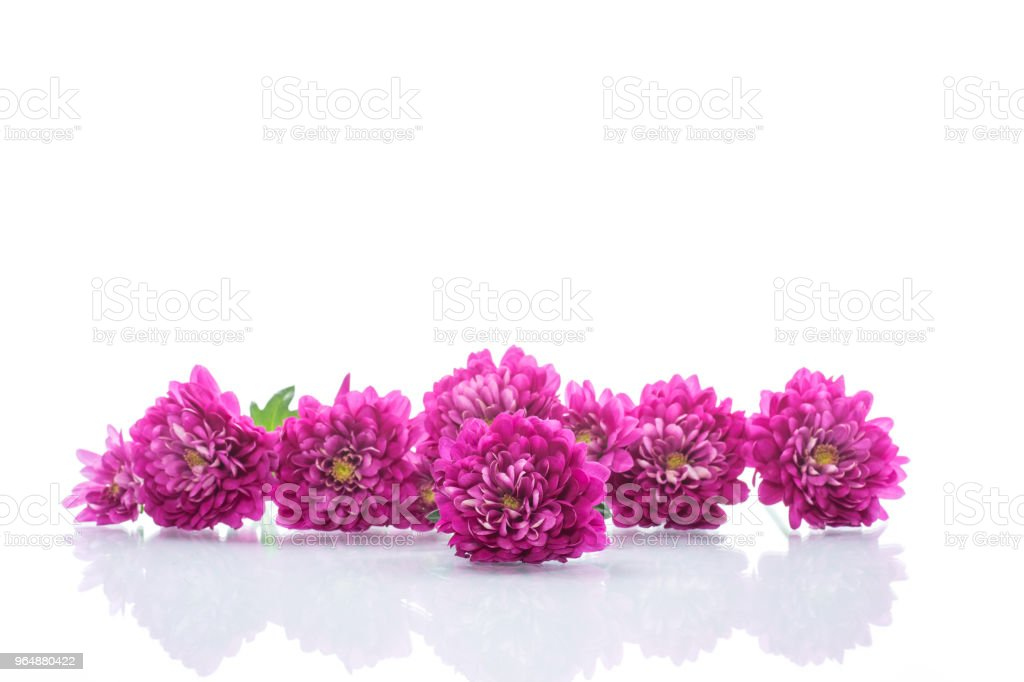 bouquet of beautiful chrysanthemums royalty-free stock photo