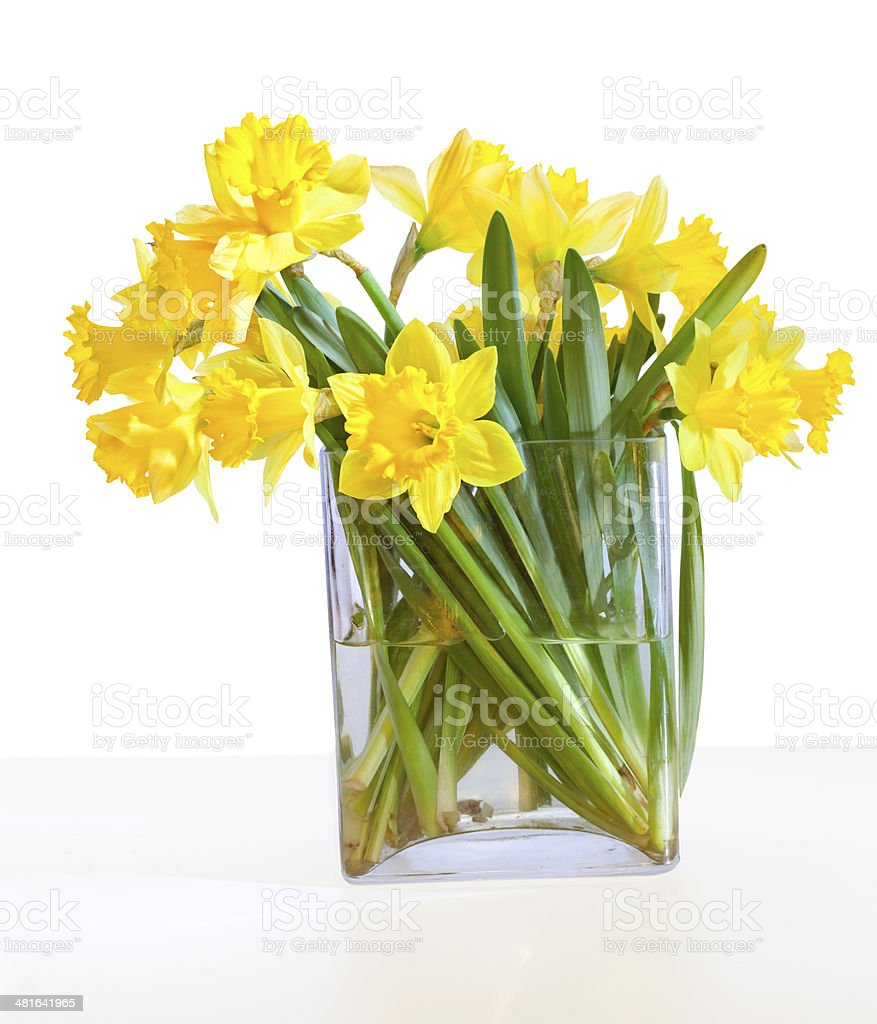 Bouquet of beautiful daffodils in a glass vase stock photo
