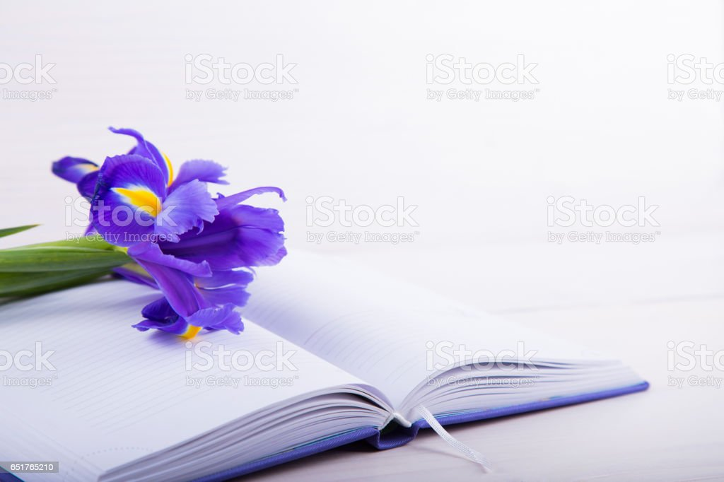 Bouquet of beautiful irises with notebook on white wooden background stock photo