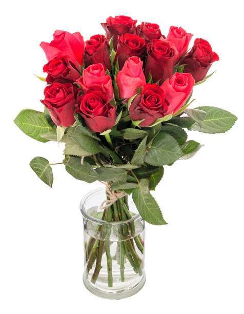Bouquet of beautiful red roses in vase isolated on white background picture id905526972?b=1&k=6&m=905526972&s=612x612&w=0&h=ilm8hp7xfzcfelcol0o5e8xagj dhiqyb1tzed n1fy=