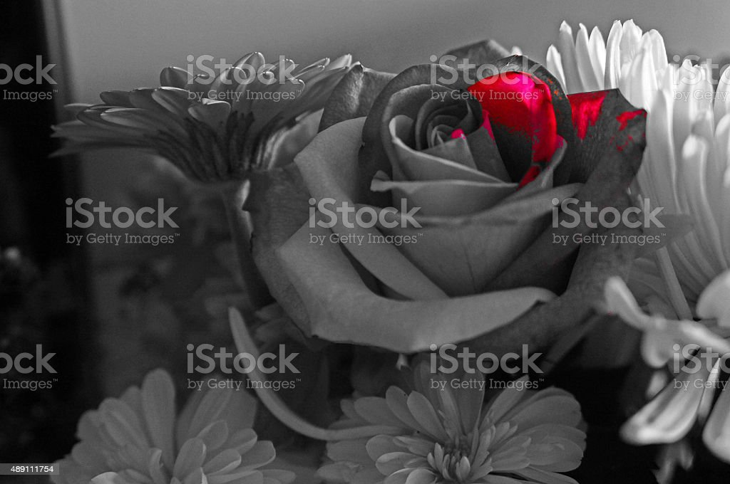 Bouquet Of Blackwhite And Red Stock Photo Download Image Now Istock