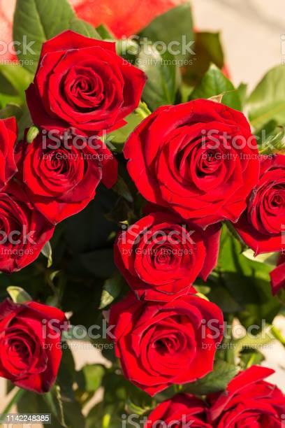 Bouquet of blossoming dark red roses picture id1142248385?b=1&k=6&m=1142248385&s=612x612&h=odzugxrj60wjpiuoaslguu3otz9j90pjvmx6v5ft ta=