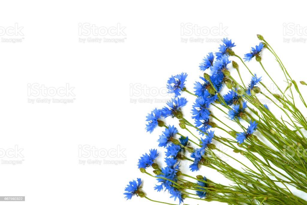 Bouquet of blue cornflowers stock photo