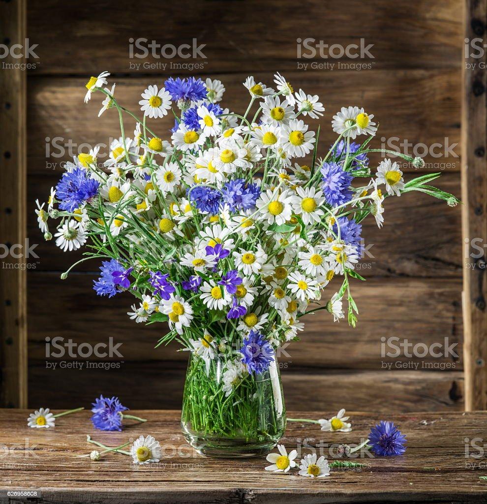 Bouquet de chamomiles et copier. - Photo