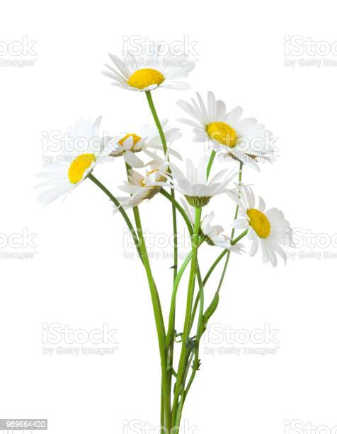 Bouquet of chamomiles isolated on a white background picture id989664420?b=1&k=6&m=989664420&s=612x612&h=waxkr 38qkomxe9hlff7vizzjyneg4gkgrlrxrmsxpy=