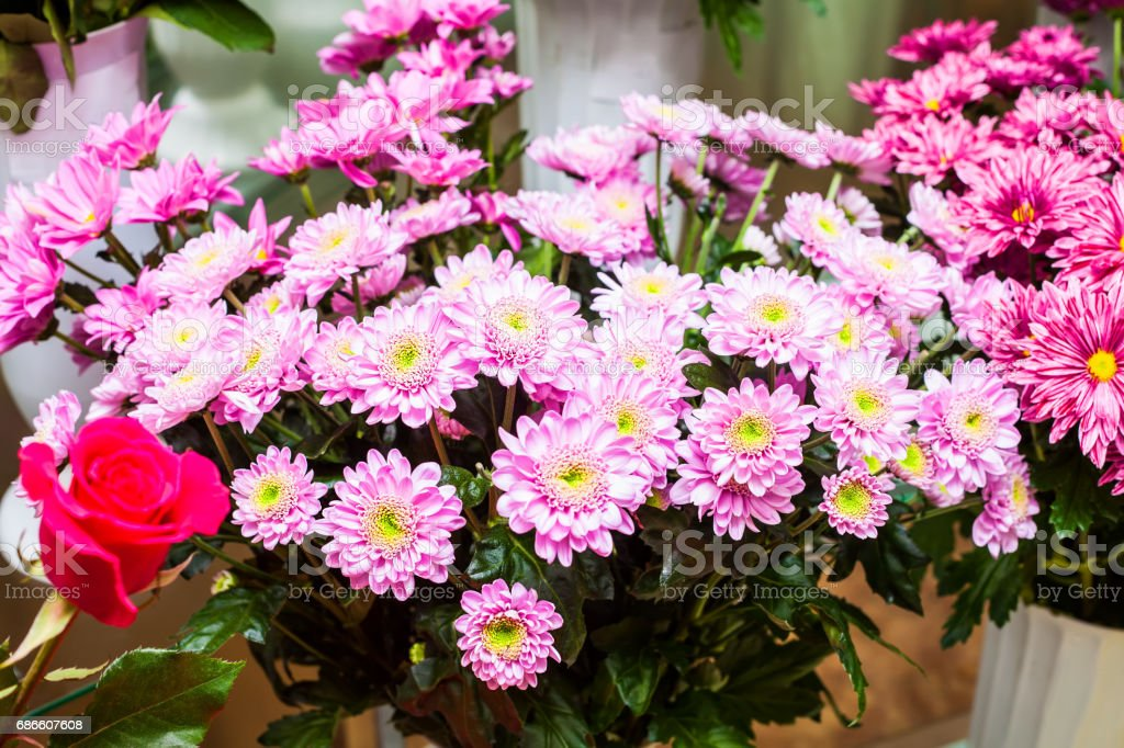 A bouquet of chrysanthemums royalty-free stock photo