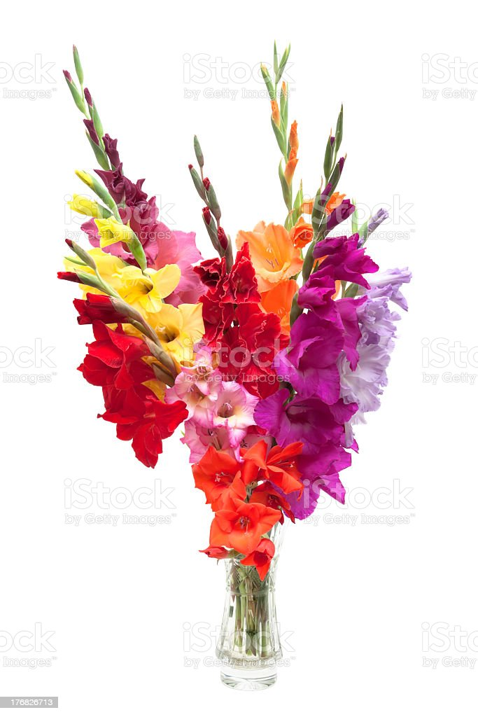 bouquet of colored gladioli stock photo