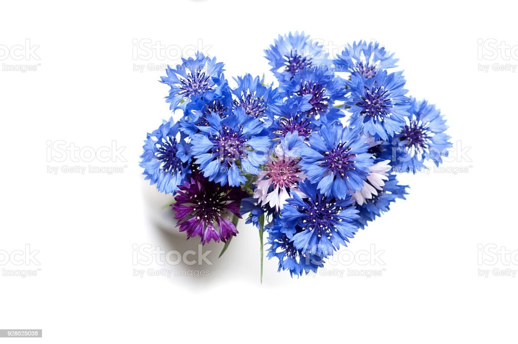Bouquet of cornflowers isolated on the white background stock photo