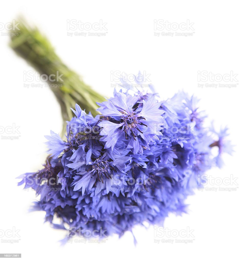 bouquet of cornflowers royalty-free stock photo