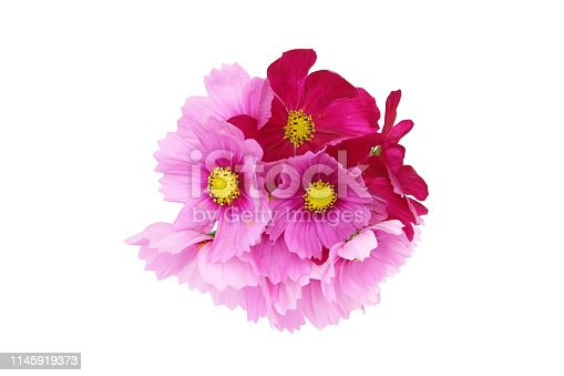 Pictured a bouquet of cosmos in a white background.