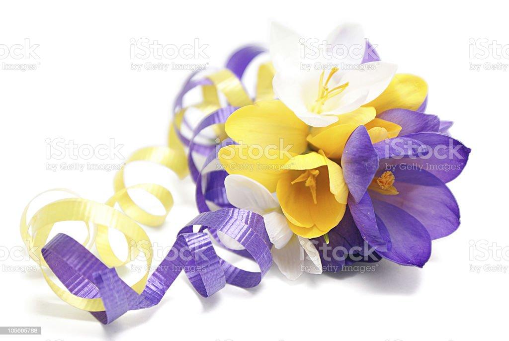 Bouquet of crocuses royalty-free stock photo