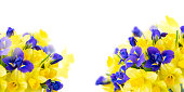 bouquet of daffodil and iris flowers isolated on white background