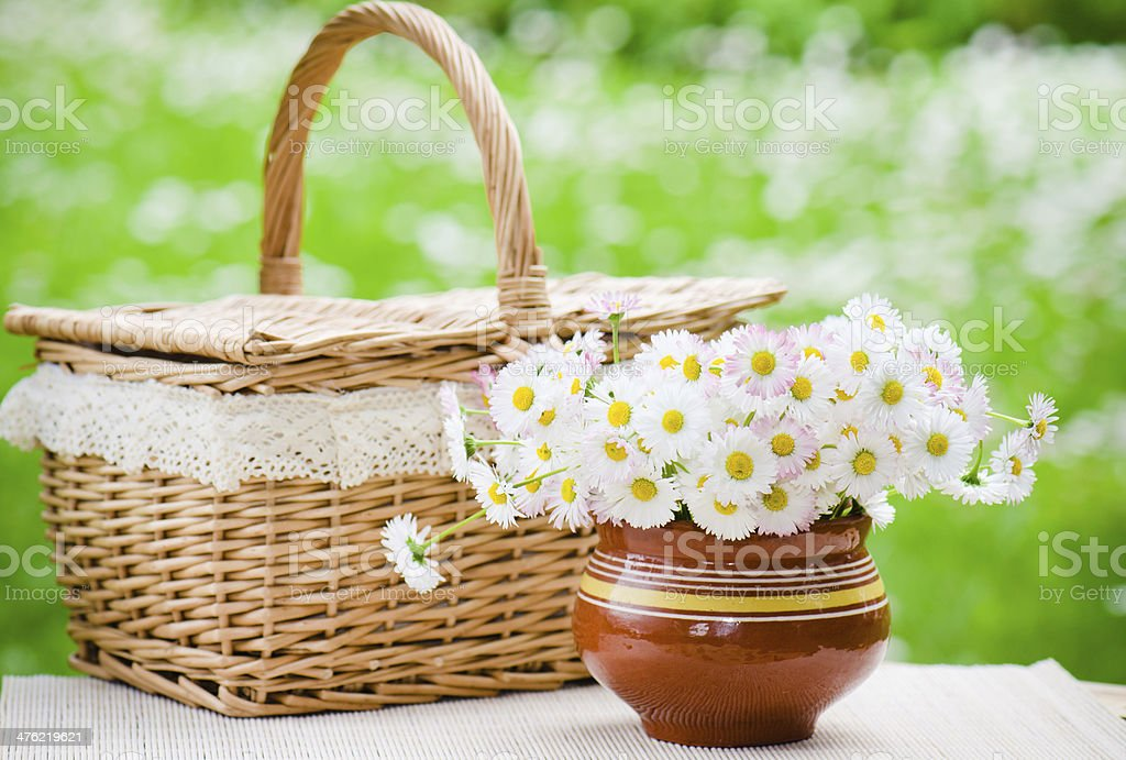 bouquet of daisies in a pot royalty-free stock photo