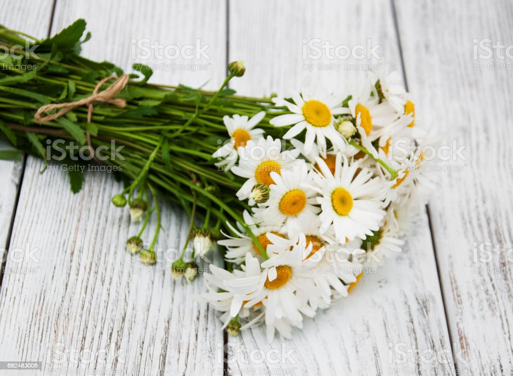 bouquet of daisies photo libre de droits