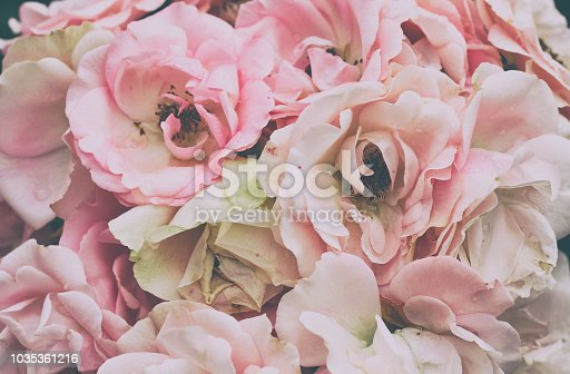 bouquet of delicate pink roses closeup, vintage style, pastel color