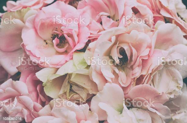 Bouquet of delicate pink roses closeup picture id1035361216?b=1&k=6&m=1035361216&s=612x612&h=3x5m2wfwyxjjcu2zfeeamh7izmxrlmeexwaj qvhymu=