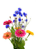 Bouquet of different flowers on a white background. Cornflower Herb or bachelor button flower and zinnia.