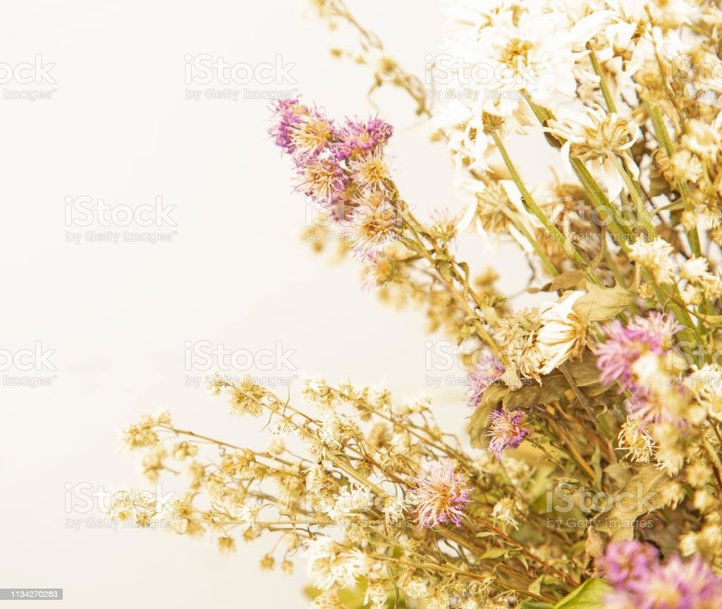 Bouquet of dried flowers on white background
