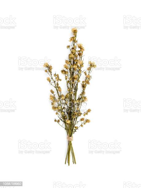 Bouquet of dried gypsophila flowers for decoration picture id1058758952?b=1&k=6&m=1058758952&s=612x612&h=vrnkd km9kja1pucqxuwr goor3ceoh9aymfunry7ic=