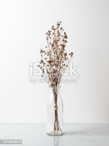 Bouquet of dried and wilted brown Gypsophila flowers in glass bottle on marble floor and white background