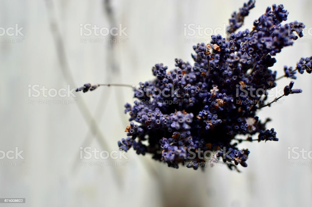 Bouquet of dried lavender flowers royalty-free stock photo