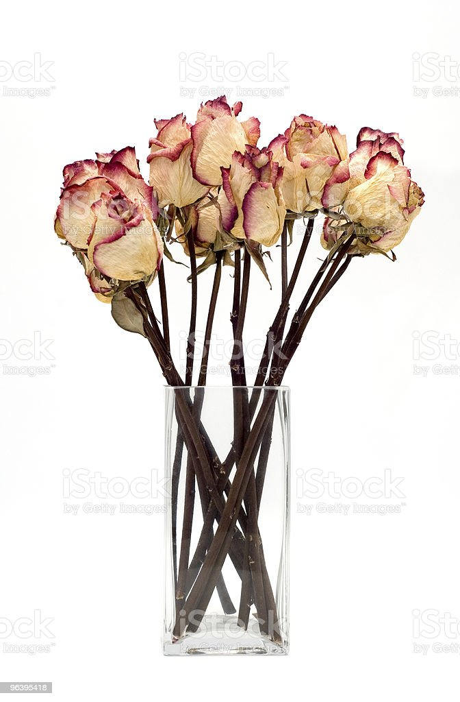 bouquet of dried roses on a white background - Royalty-free Aging Process Stock Photo