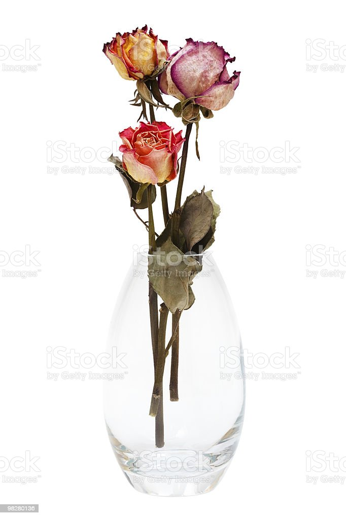 bouquet of dried roses royalty-free stock photo