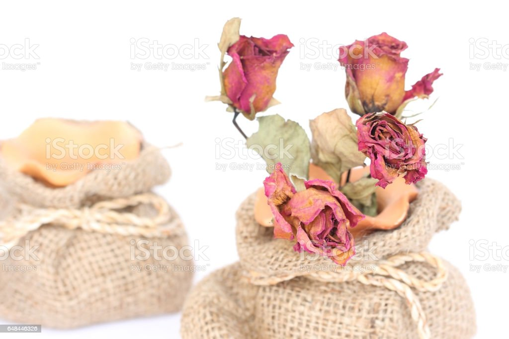 Bouquet of dried withered roses on white background. stock photo