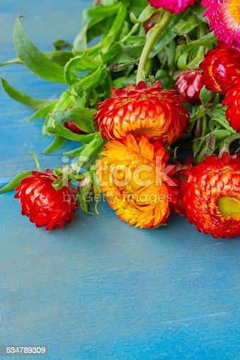 948743278istockphoto Bouquet of Everlasting flowers 534789309