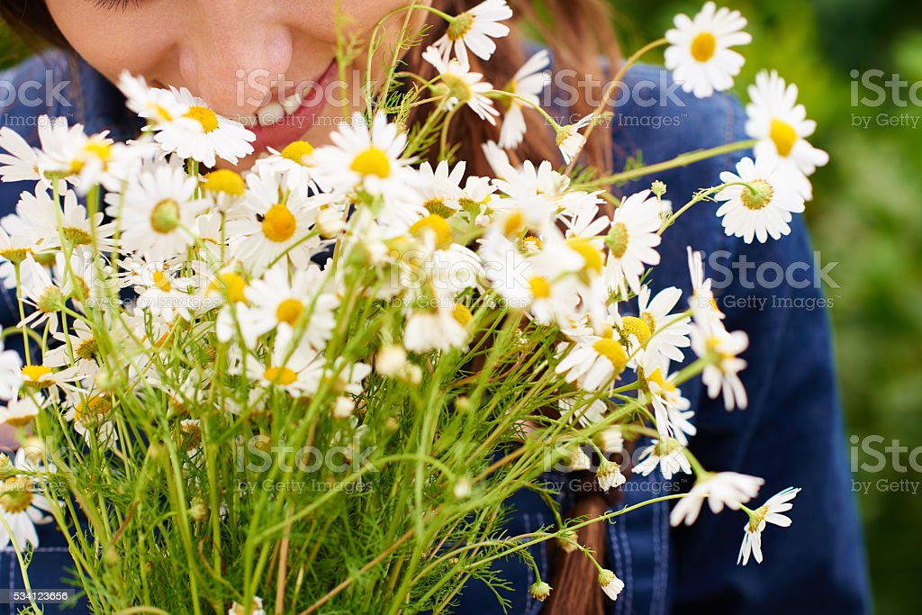 Bouquet of field daisies stock photo