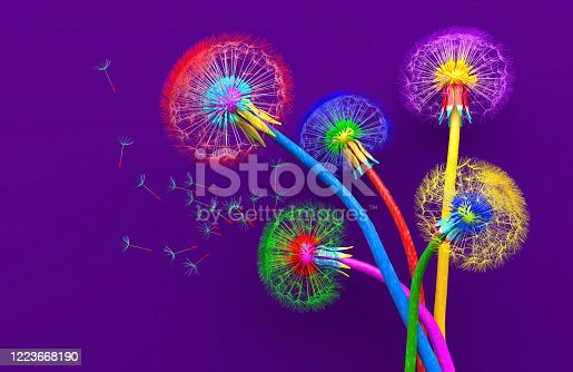 Bouquet of five flowers of blossoming dandelions of unusual colorful colors. Bright multi-colored abstract dandelions on a purple background. Creative conceptual illustration. opy space. 3D render.