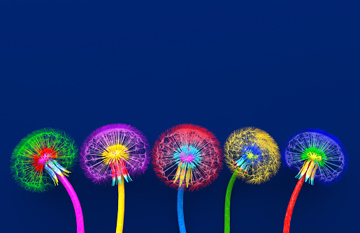 Bouquet of five flowers of blossoming dandelions of unusual colorful colors. Bright multi-colored abstract dandelions on a blue background. Creative conceptual illustration. opy space. 3D render.
