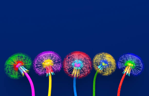 bouquet von fünf blumen von blühenden löwenzahn von ungewöhnlichen bunten farben. helle mehrfarbige abstrakte löwenzahn auf blauem hintergrund. kreative konzeptionelle illustration. opy raum. 3d-rendern - bunt farbton stock-fotos und bilder