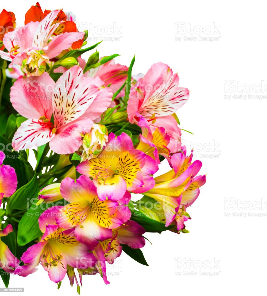bouquet of flowers. Alstroemeria. Bouquet of flowers Alstroemeria. Flowers Alstroemeria. Bouquet of alstroemeria flowers isolated on white background stock photo
