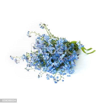 Mazzo di fiori non ti scordar di me su uno sfondo bianco - Foto di uno shamrock ...