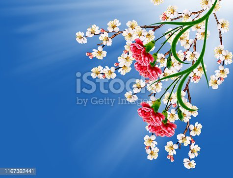 spring landscape. Flowering apricot. Spring flowering garden. red carnation
