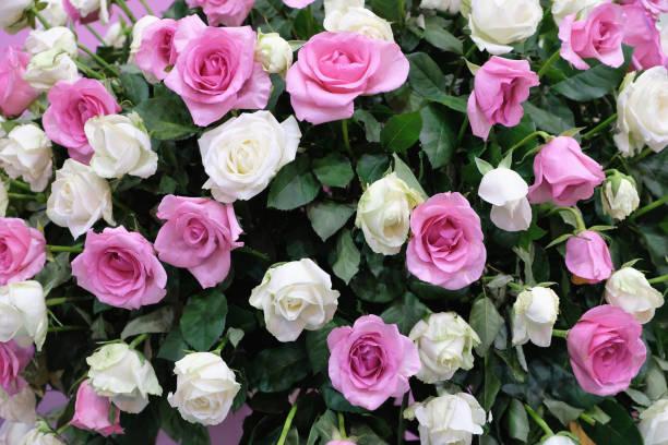 Bouquet of flowers picture id1205006733?b=1&k=6&m=1205006733&s=612x612&w=0&h=l2qtz5daz2xnbdcqvbdqqosdnop dnz0rrribenrnds=