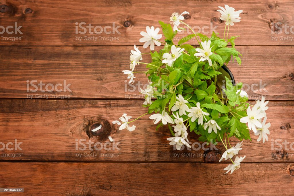 Bouquet of flowers snowdrop Anemone stock photo