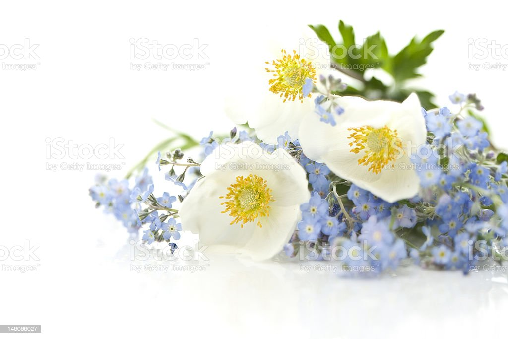 bouquet of forget-me-not and anemone stock photo