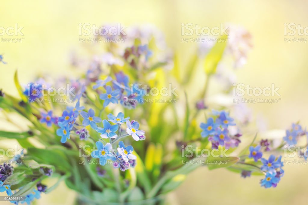 Bouquet of forget-me-nots stock photo