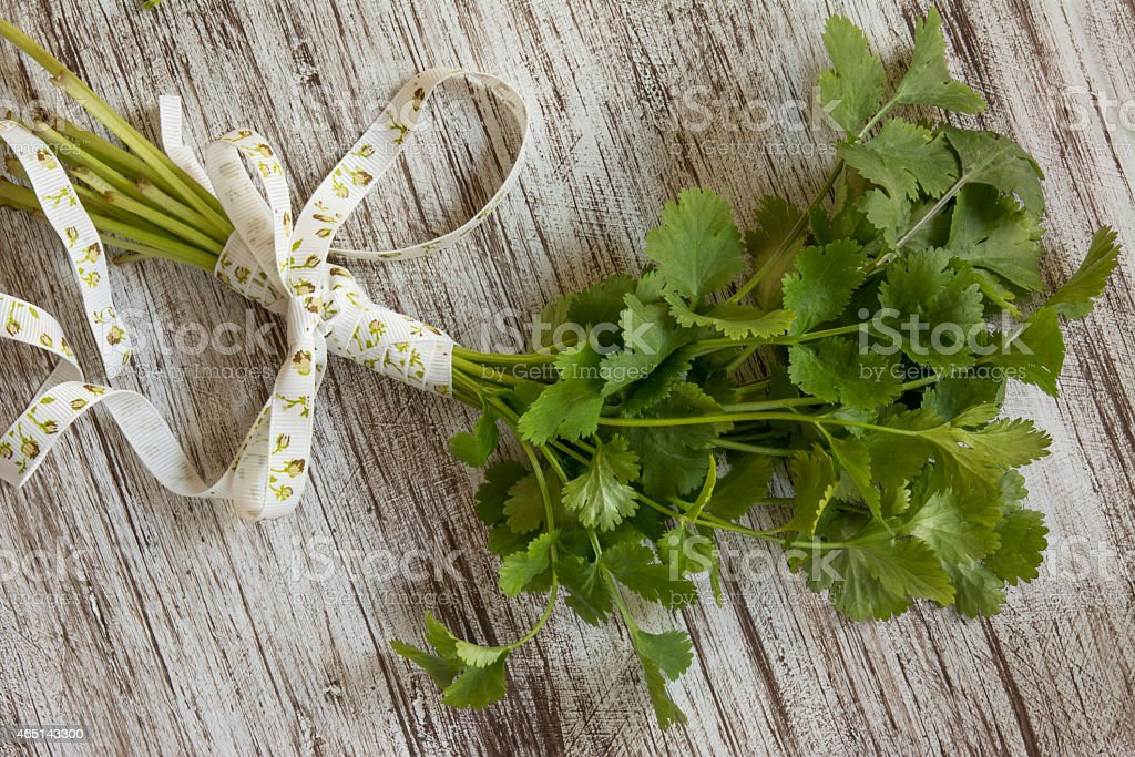 bouquet of fresh coriander or cilantro, on white wooden grunge...