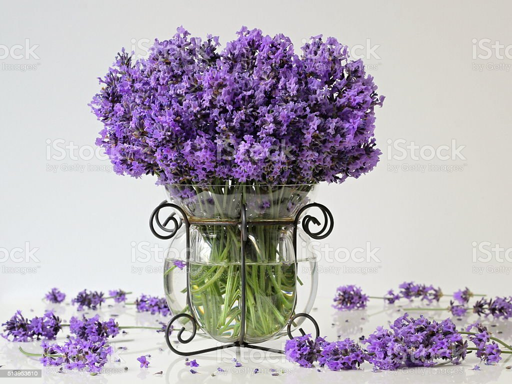 Bouquet Of Fresh Lavender Flowers In Vase Floral Still Life Stock ...