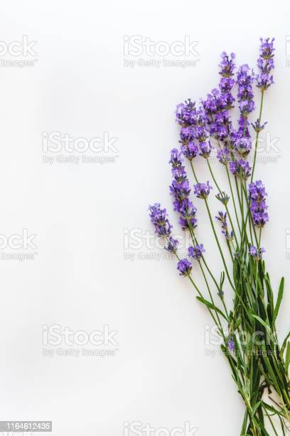 Bouquet of fresh lavender flowers on white background top view copy picture id1164612435?b=1&k=6&m=1164612435&s=612x612&h=efisno7mhbuwfqkpjzoitycohv geg1schcwb3oimpu=