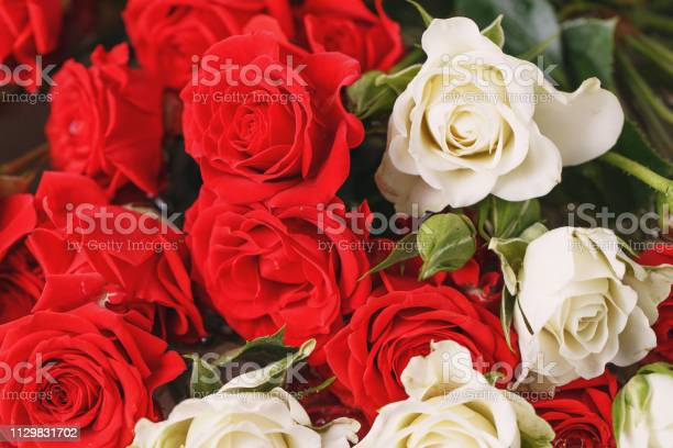 Bouquet of fresh red and white roses picture id1129831702?b=1&k=6&m=1129831702&s=612x612&h=babyyv6cz1voeo92se5fr6yhq1knvsglte3lzyyjx u=