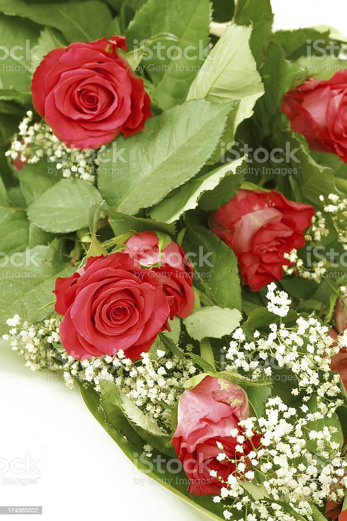 Bouquet of fresh red roses on white royalty-free stock photo