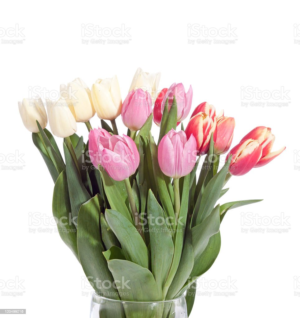 bouquet of fresh tulips royalty-free stock photo