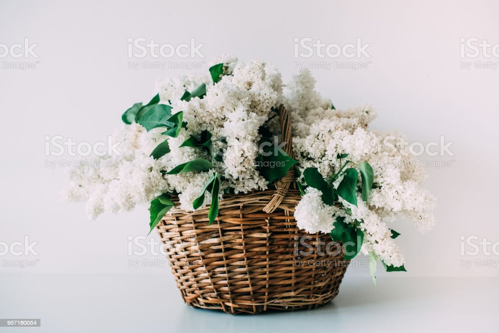Bouquet of fresh white lilac flowers in wicker basket on wooden stock photo